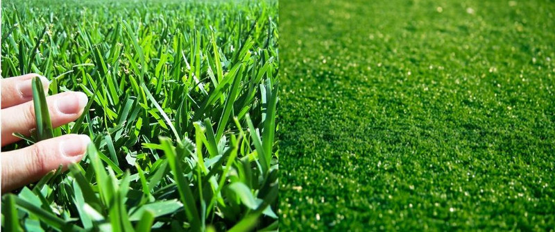 Real Grass or Artificial Grass